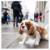 Anjing Pun Bisa Mendulang Dollar dari Internet